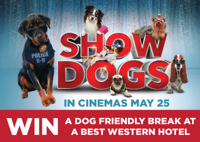 Show Dogs | Competition